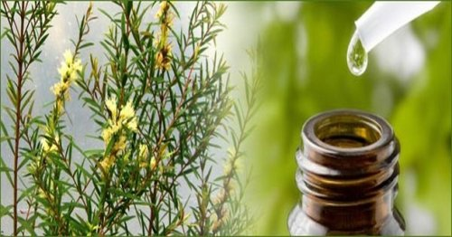 Tea Tree Oil: Quick and Easy Hair Care Tips To Make Your Hair Beautiful