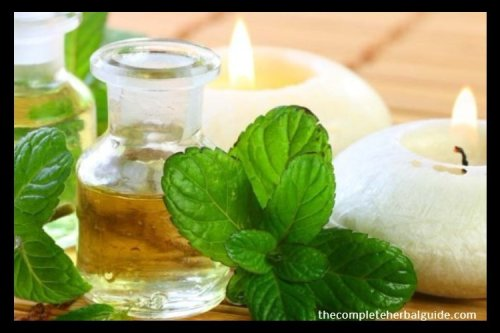 5 Best Essential Oil and Recipes for Allergy Season - The Complete Herbal Guide