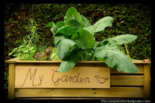 How to Make an Indoor Herb Garden and What to Grow