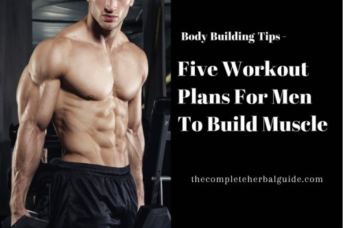 Five Workout Plans For Men To Build Muscle - The Complete Herbal Guide
