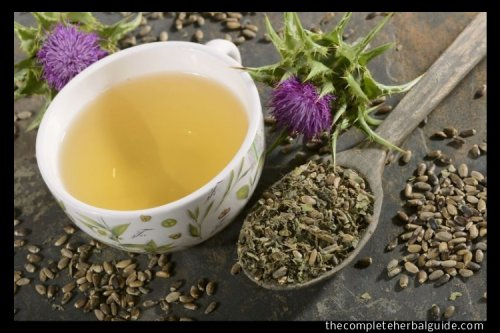 Can You Cure Addiction Naturally? - The Complete Herbal Guide