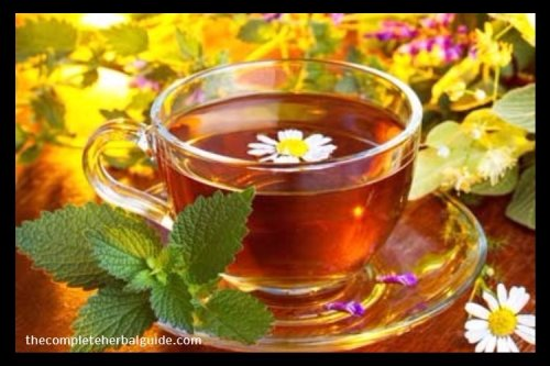 5 Best Teas to Lose Weight and Belly Fat - The Complete Herbal Guide