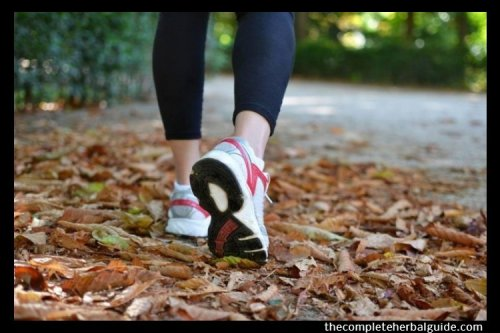 7 Exercises To Get Your Body in Shape - The Complete Herbal Guide