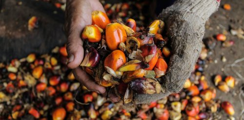How palm oil became the world's most hated, most used fat source