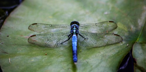 Insect population collapse: new evidence links it to dams