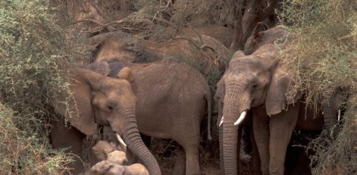 Mali's elephants show how people and nature can share space in a complex world