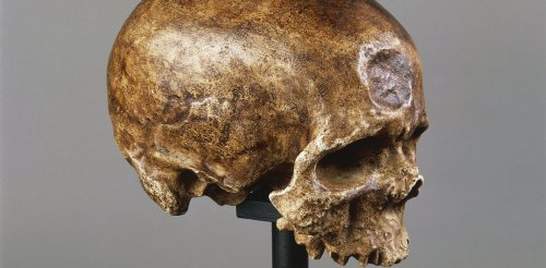 How did humans evolve, and will they evolve more?