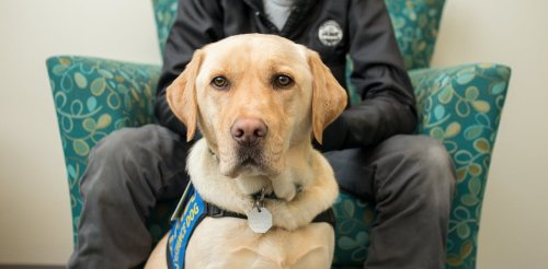 Justice facility dogs: The quiet, skilled heroes helping child victims