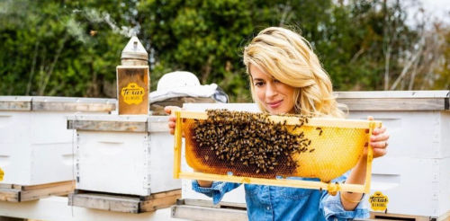 'Over the top': backlash against TikTok's bee lady not justified, say bee experts
