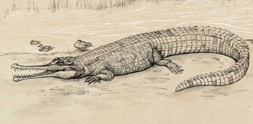 Prehistoric 'river boss' is the largest extinct croc species ever discovered in Australia