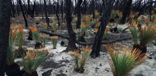 5 remarkable stories of flora and fauna in the aftermath of Australia's horror bushfire season