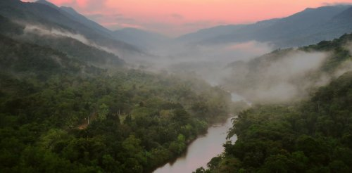 Brazil's Atlantic Forest will change more in the next 50 years than at any time since the last ice age