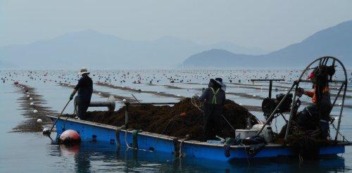 Alimentaire, cosmétiques, médicaments ou biocarburants – les 1001 ressources des algues