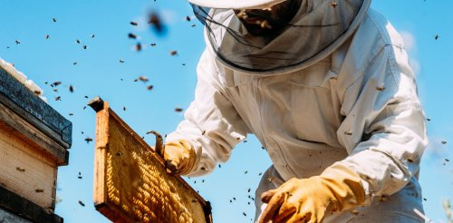 Life lessons from beekeepers – stop mowing the lawn, don't pave the driveway and get used to bugs in your salad