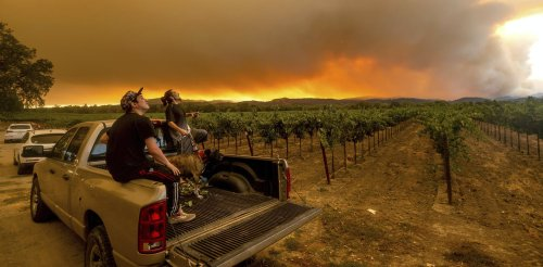 Up in smoke: How wildfires are tainting grapes and threatening the wine industry