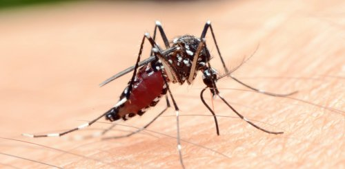 We're a step closer to figuring out why mosquitoes bite some people and not others