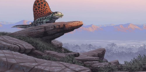Rainforest collapse in prehistoric times changed the course of evolution