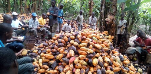 Child slavery in West Africa: understanding cocoa farming is key to ending the practice