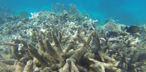 Not declaring the Great Barrier Reef as 'in danger' only postpones the inevitable