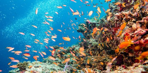 This election is our last chance to save the Great Barrier Reef