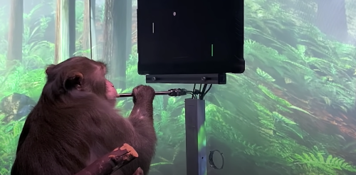 Neuralink's monkey can play Pong with its mind. Imagine what humans could do with the same technology