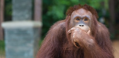 Why animals recognise numbers but only humans can do maths