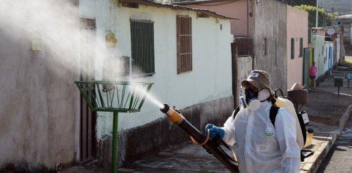 Pesticide pyriproxyfène–virus Zika : découverte d'une alliance tragique pour le développement cérébral