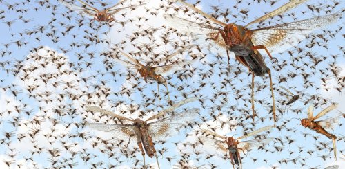 What a warmer, wetter world means for insects, and for what they eat