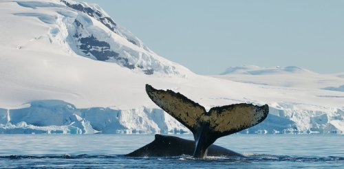We discovered that whale and dolphin brains produce lots of heat. Why it matters