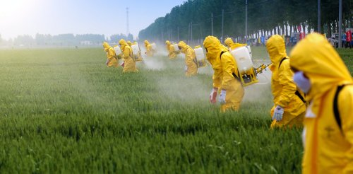 Pesticides: interactions between agrochemicals increase their harm to bees