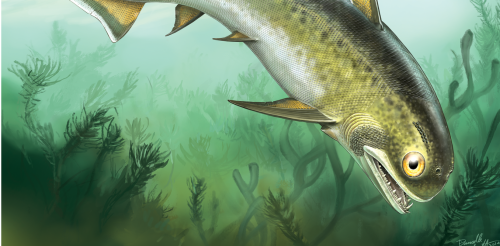 Evolution of a smile: 400 million year old spiny fish overturns shark theory of tooth origins