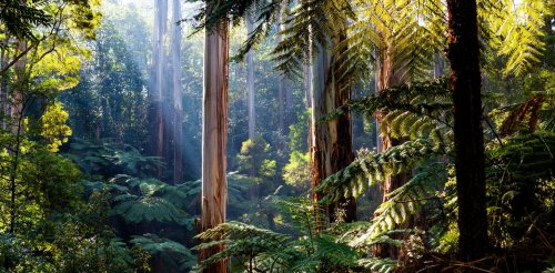 Every year in Australia, nature grows 8 new trees for you — but that alone won't fix climate change