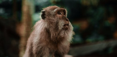 First human-monkey embryos created – a small step towards a huge ethical problem