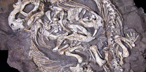 What an unusual fossil reveals about parental care among pre-mammalian ancestors