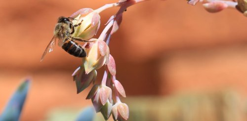 What honeybees in South Africa need from people: better managed forage