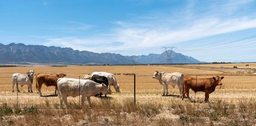 Small towns are collapsing across South Africa. How it's starting to affect farming