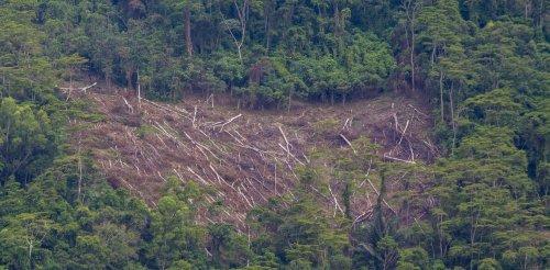 COVID-19, keacuhan masyarakat, dan turunnya kualitas demokrasi: tiga faktor yang ancam upaya konservasi lingkungan di Indonesia