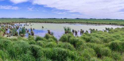 To be resilient, the Canadian Prairie needs lots of wetlands