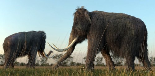 Bringing woolly mammoths back from extinction might not be such a bad idea — ethicists explain