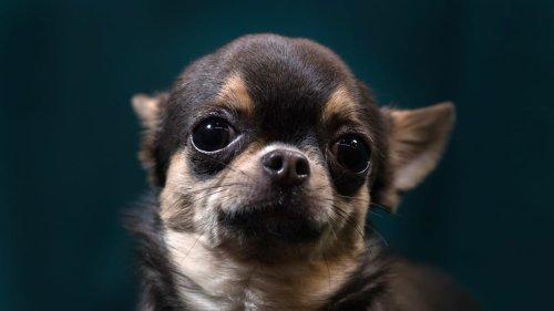 Atlanta Woman Demands Lash Tech Pay Medical Bills After Alleged Chihuahua Attack