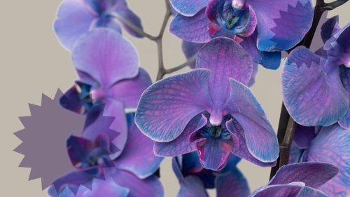 The Sill's Watercolor Orchids Are So Vibrant, They Don't Look Real