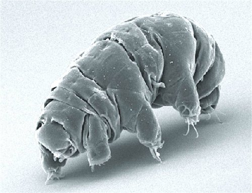 The Top 5 Craziest Things Humans Have Done to Tardigrades Whether we crash them into the Moon or shoot them from guns, humans are trying to become more like those cute 'water bears.'