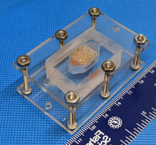 NASA Awards Prize for Lab-Grown Tissue Made with 3D Printing Technology