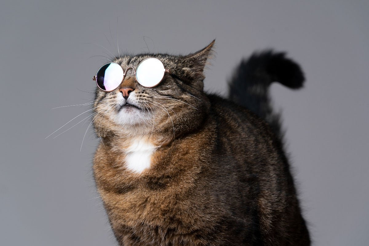 18 Super Cool Cat Breeds you'll Love