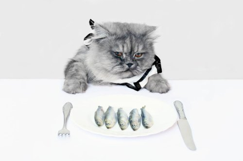 High Calorie Cat Food: A Complete Guide for Underweight Kitties