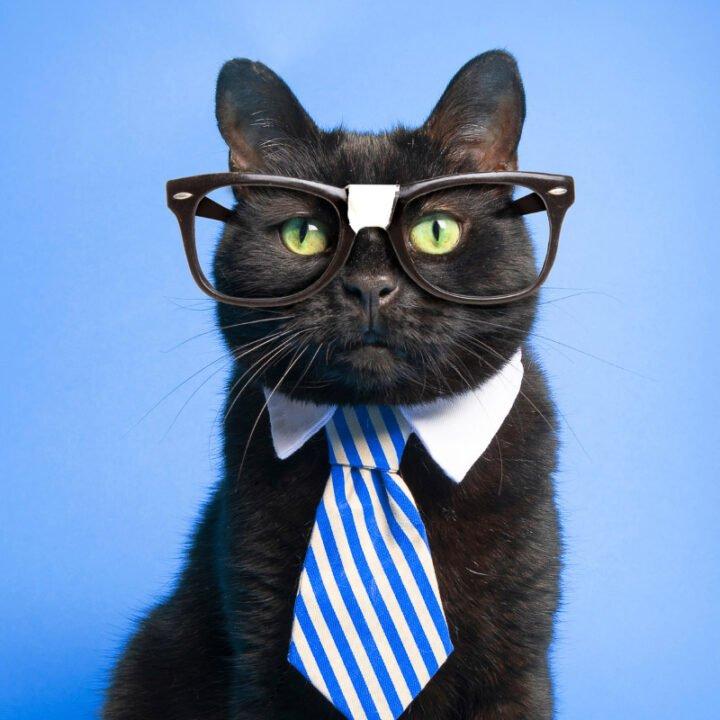 13 Smartest Cat Breeds You'll Love