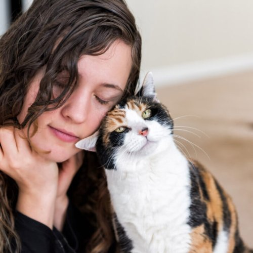 Why Do Cats Rub Their Faces on Things? 8 Reasons