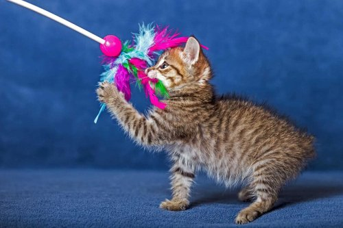 6 Best Toys for Cats your Favourite Feline Will Love