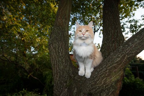 GPS Cat Collar: The 7 Best Options for Your Cat