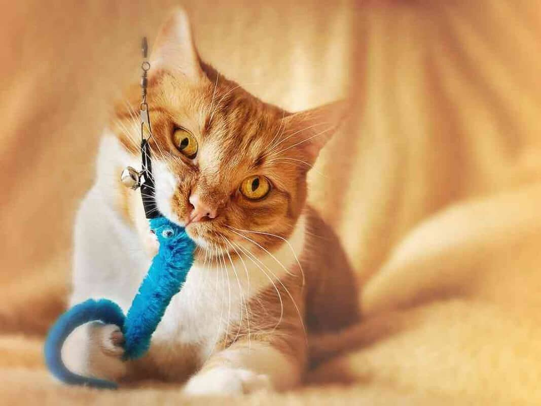14 Best Cat Chew Toys Your Kitty Will Love